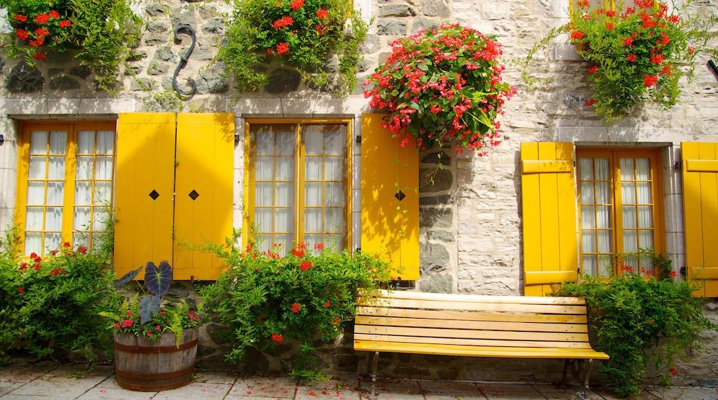 Quartier Petit Champlain featuring flowers and street scenes