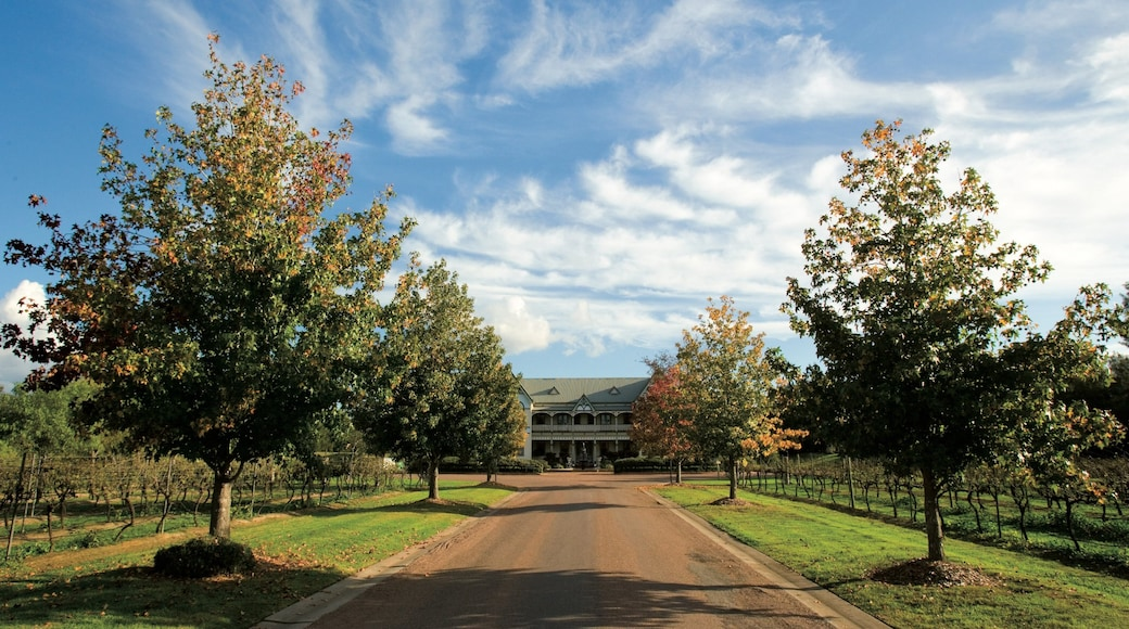 Hunter Valley which includes tranquil scenes and farmland