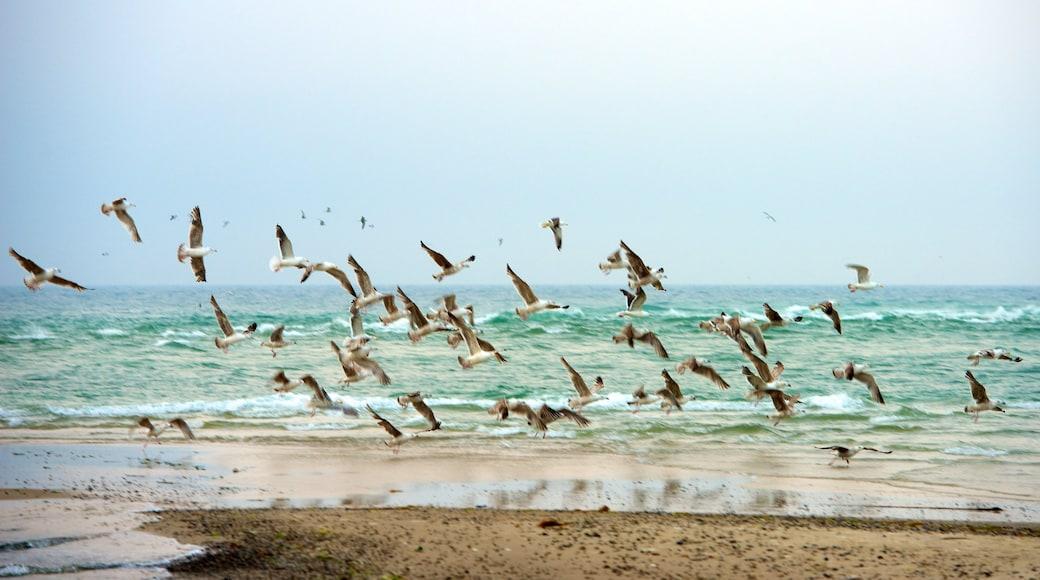 Grenen joka esittää hiekkaranta ja linnusto