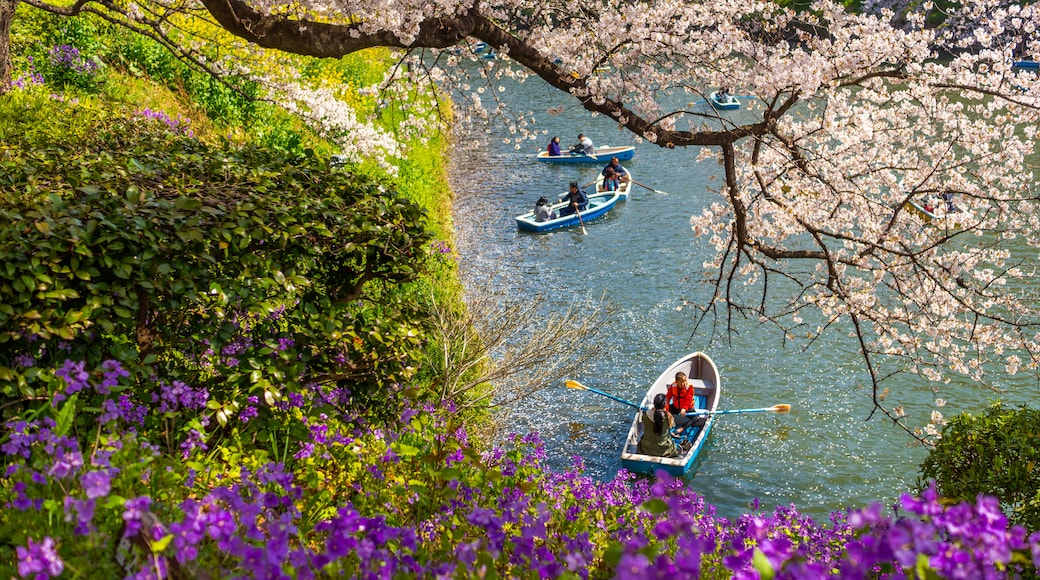 Chiyoda featuring kayaking or canoeing, a river or creek and wildflowers