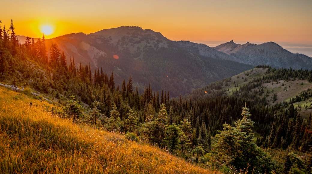Hurricane Ridge showing landscape views, tranquil scenes and a sunset
