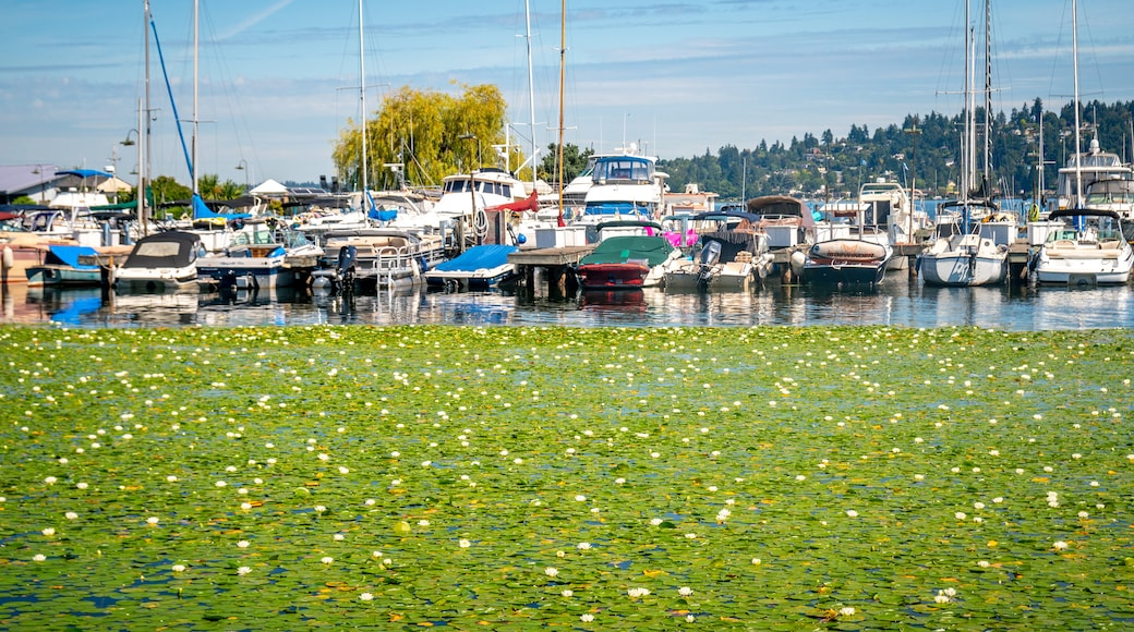 Lake Washington showing a bay or harbor