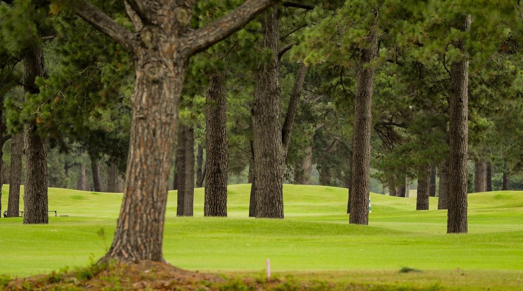 Myrtlewood Golf Club featuring golf
