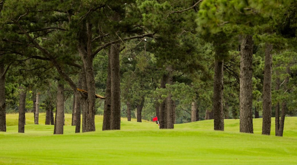 Myrtlewood Golf Club which includes golf