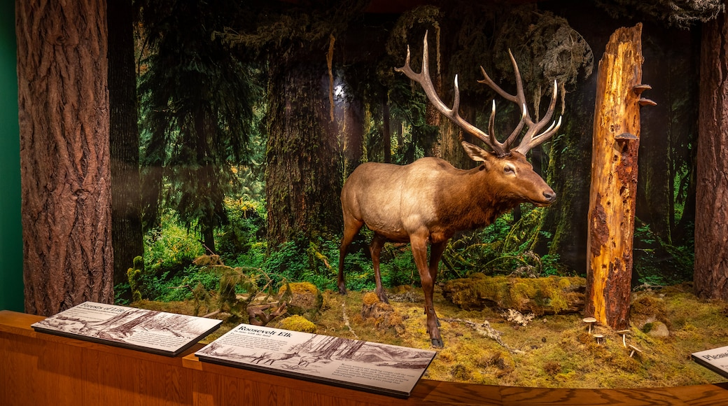 Olympic National Park Visitor Center which includes interior views
