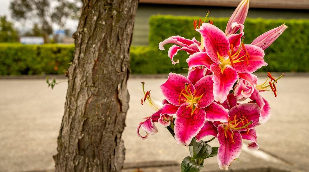 Sequim featuring flowers