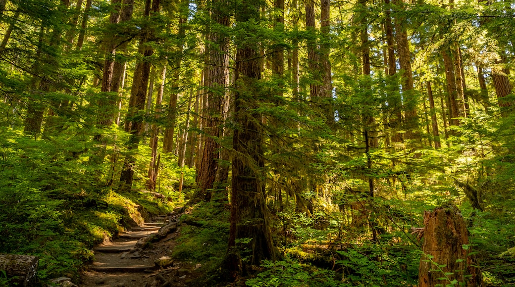 Sol Duc Falls featuring forest scenes
