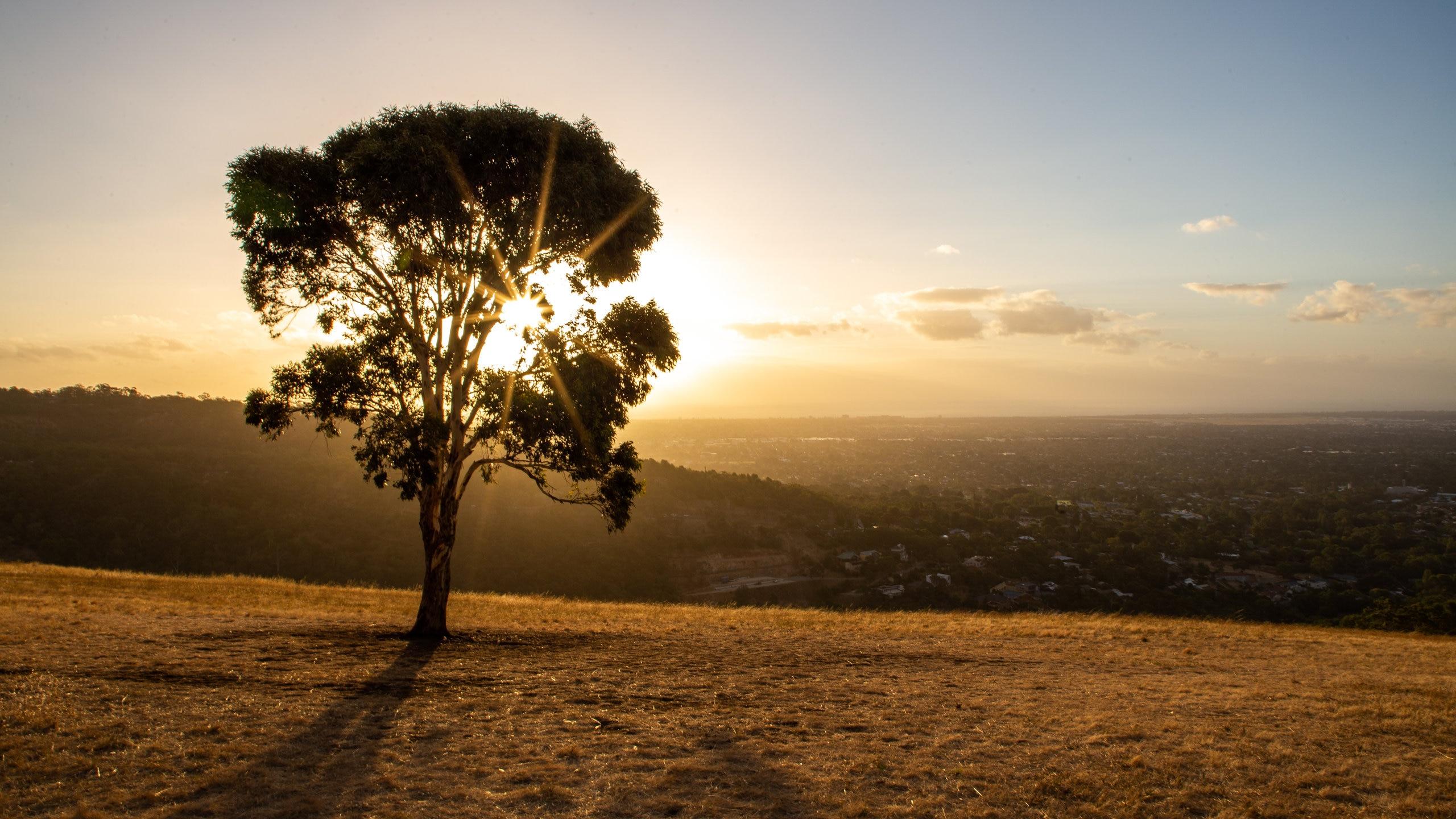 Mitcham, Adelaide, South Australia, Australia