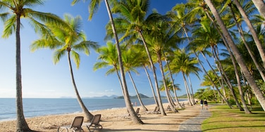 Palm Cove, Cairns, Queensland, Australia