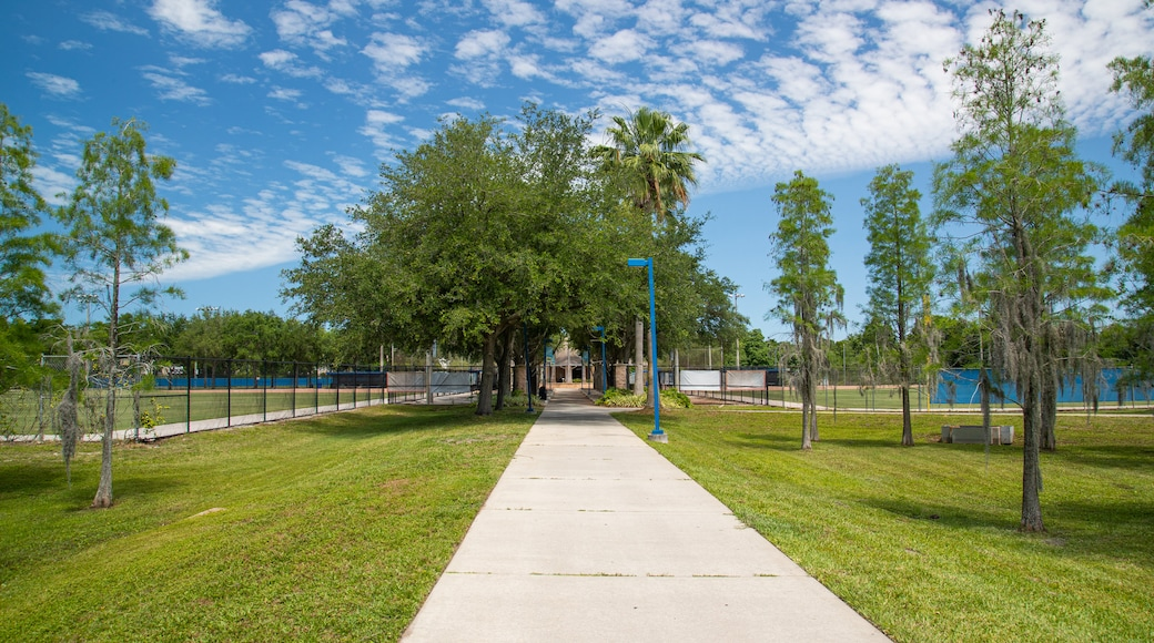 Clearwater showing a park