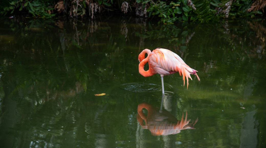 Sarasota which includes bird life and a pond