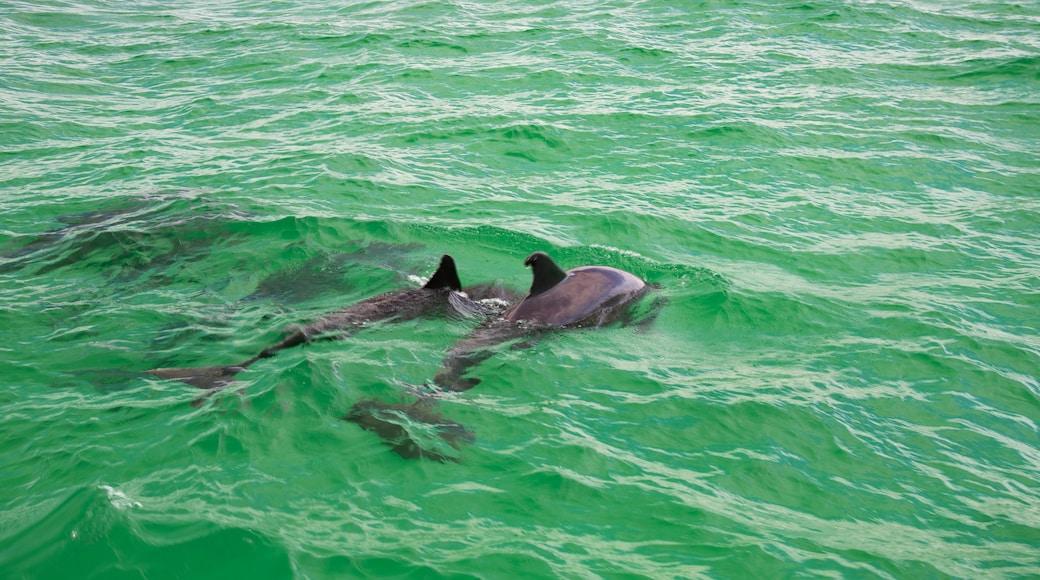 Florida Panhandle showing marine life and general coastal views