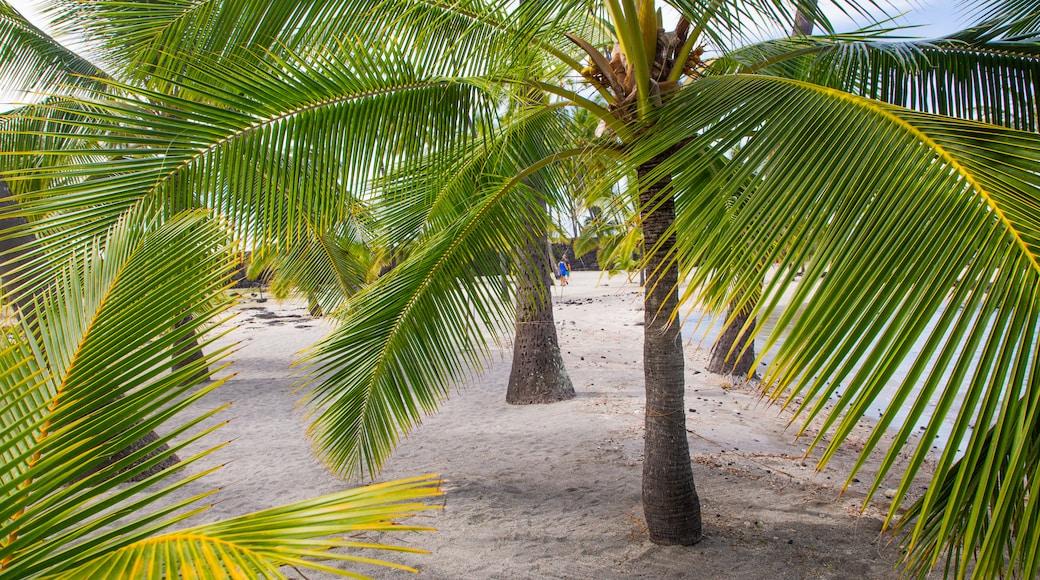 Pu\'uhonua o Honaunau National Historical Park featuring a sandy beach and tropical scenes