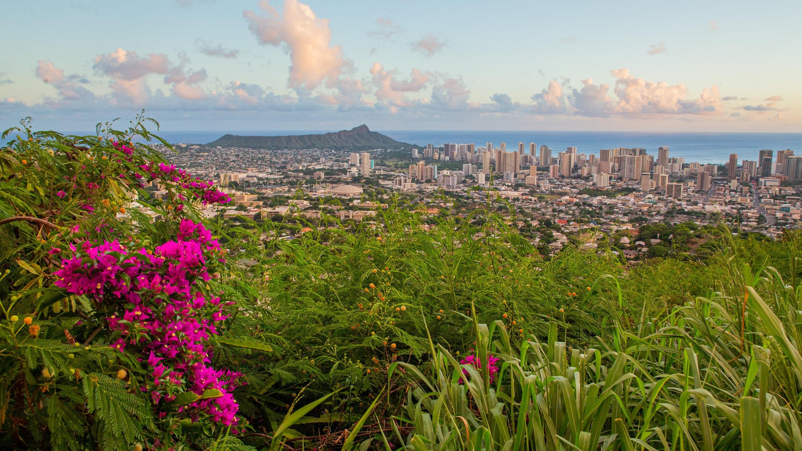 Makiki - Lower Punchbowl - Tantalus, Honolulu, Hawaii, Stati Uniti d'America