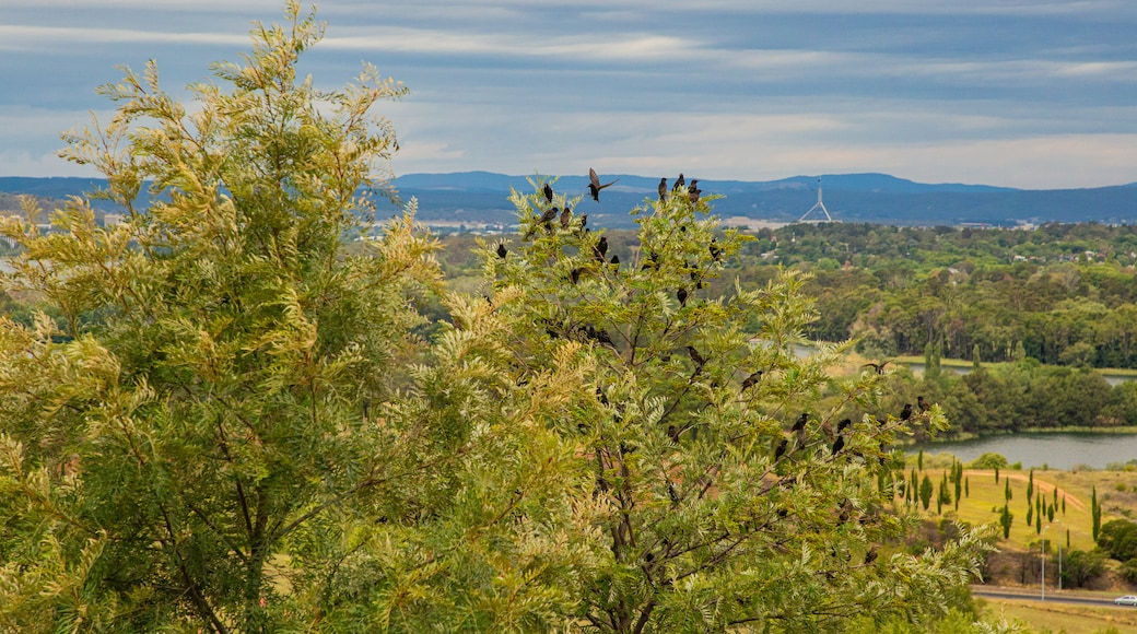 National Arboretum Canberra which includes landscape views and bird life