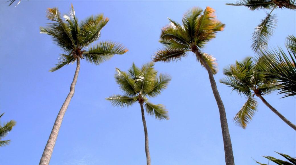 Juan Dolio showing tropical scenes