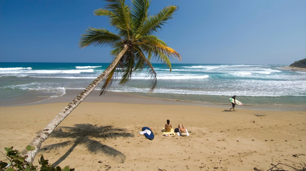 Cabarete showing a beach and tropical scenes