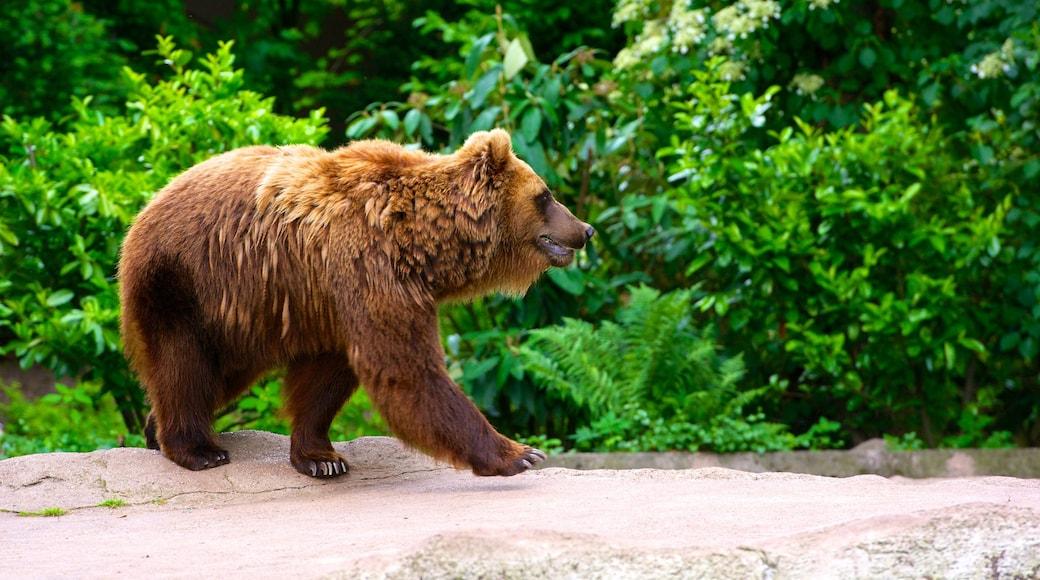 Tierpark Hagenbeck welches beinhaltet gefährliche Tiere und Zootiere