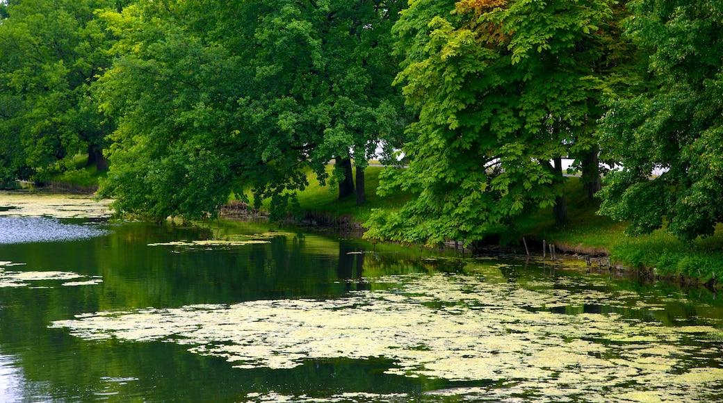 Kiel welches beinhaltet See oder Wasserstelle und Garten