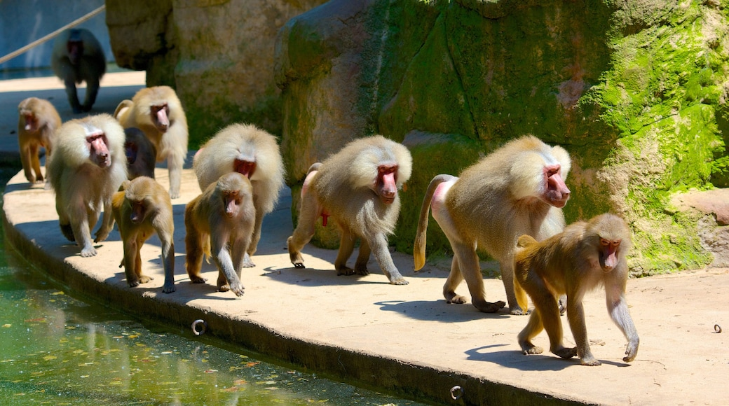 Zoo Köln mit einem Tiere und Zootiere