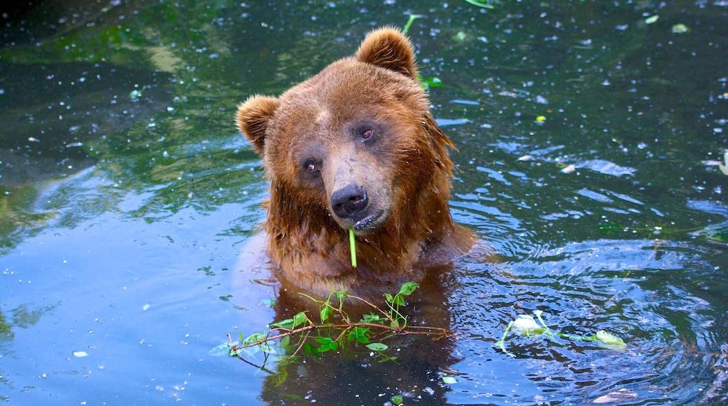 Zoo Köln mit einem gefährliche Tiere und Zootiere