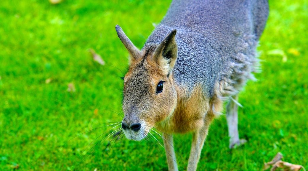 Tierpark Hagenbeck mit einem Zootiere und niedliche oder freundliche Tiere