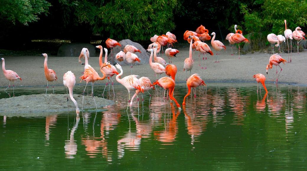 Tierpark Hagenbeck welches beinhaltet Zootiere und Vögel