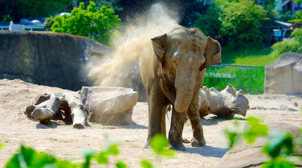 Zoo Köln das einen Landtiere und Zootiere