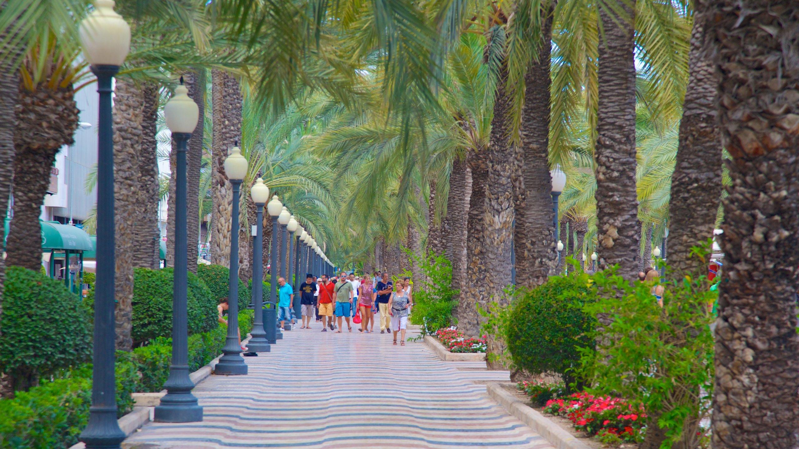 50797 Alicante - Roteiro em Alicante: descubra os principais pontos turísticos da cidade