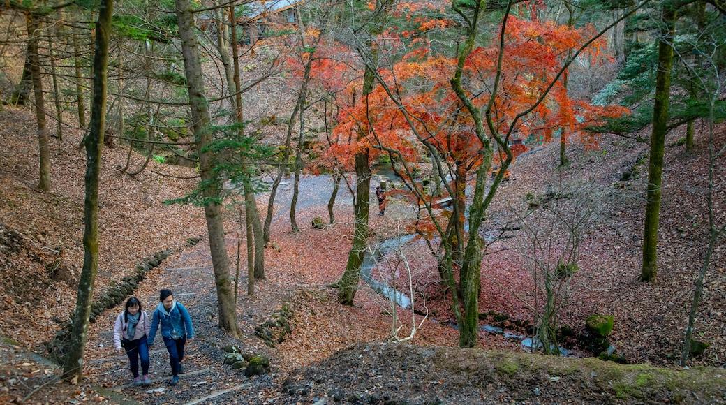 Karuizawa featuring a park, hiking or walking and fall colors