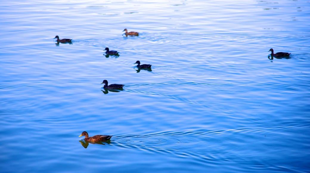 Casa de Campo das einen Teich und Vögel