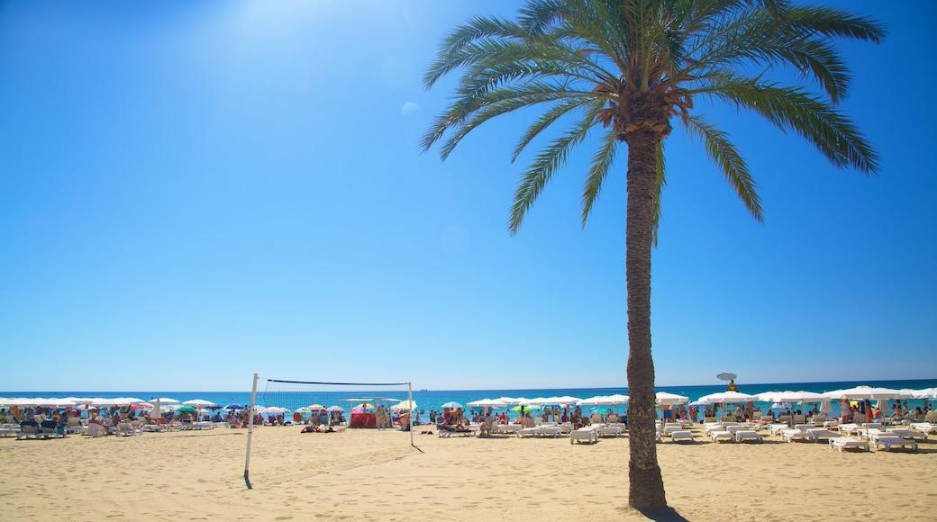 Playa de Postiguet ofreciendo escenas tropicales y una playa