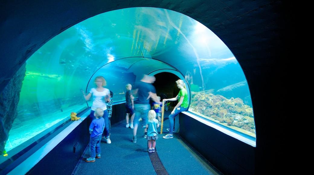 Universeum som inkluderar interiörer och havsdjur såväl som en familj