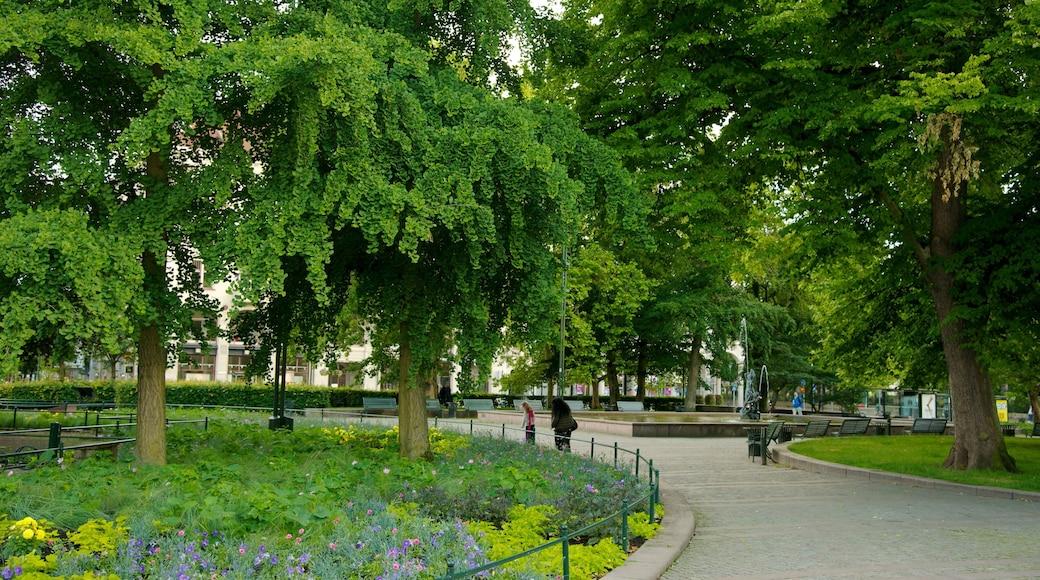 Gustav Adolfs torg presenterar en park