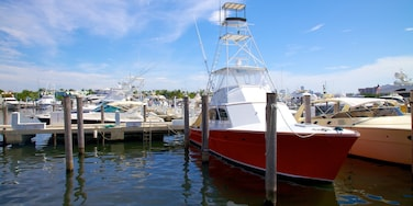 Coconut Grove showing a marina