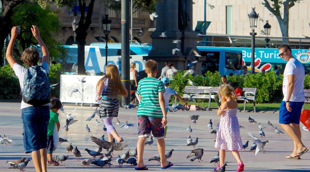 Plaza de Cataluña mostrando una plaza y aves y también una familia