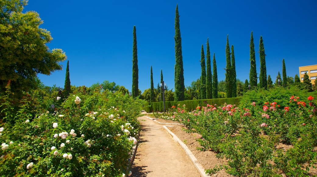 Parque Garcia Lorca featuring flowers and a park