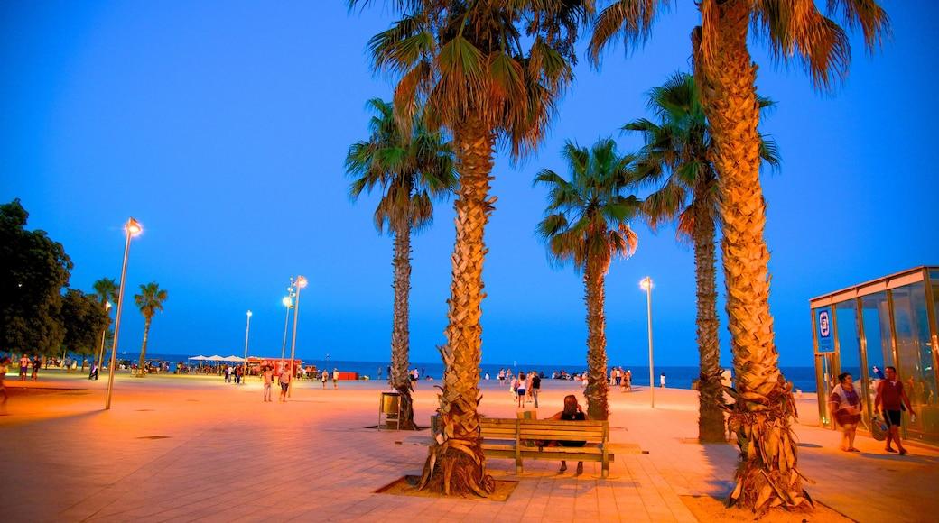 Barcelonetan ranta johon kuuluu yleiset rantanäkymät, yökuvat ja katunäkymät