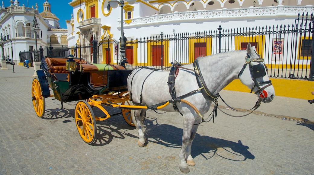 Plaza de Toros de la Real Maestranza som visar gatuliv och landdjur