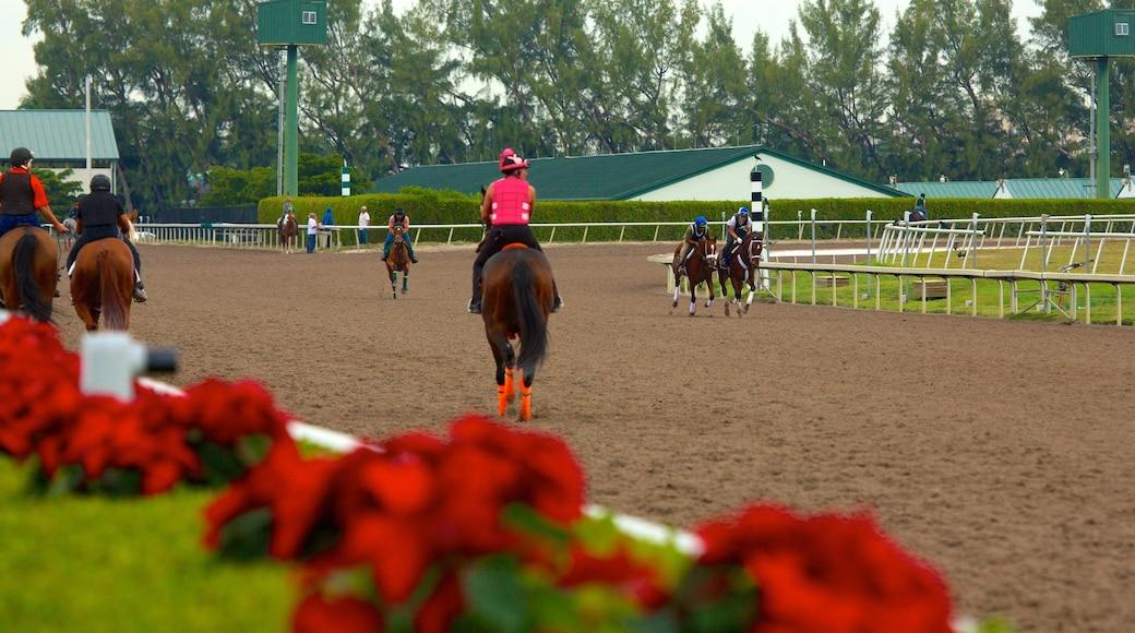 Golfstrømparken fasiliteter samt hesteridning