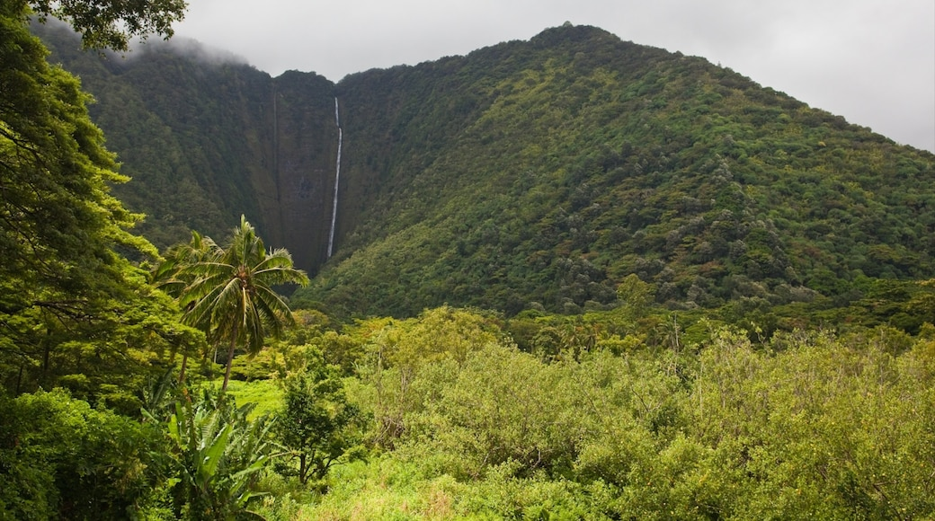 Honokaa showing a waterfall, rainforest and mountains