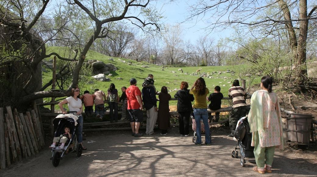 Bronxin eläintarha johon kuuluu eläintarhan eläimet sekä suuri ryhmä ihmisiä