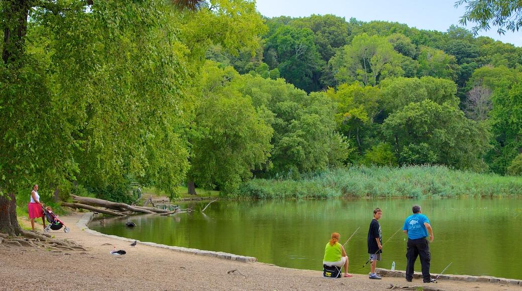 Prospect Park som viser dam, hage og fisking