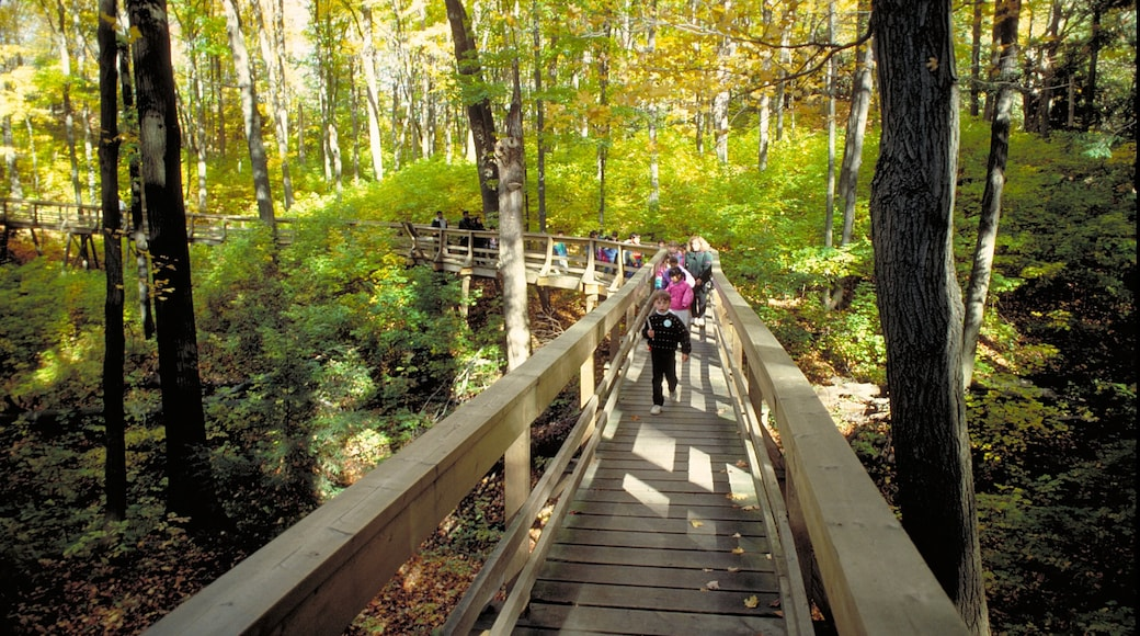 Kleinburg which includes a bridge and forest scenes as well as children