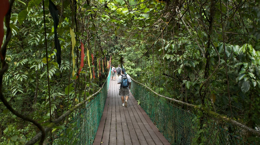 Gunung Mulu National Park featuring hiking or walking, a suspension bridge or treetop walkway and rainforest