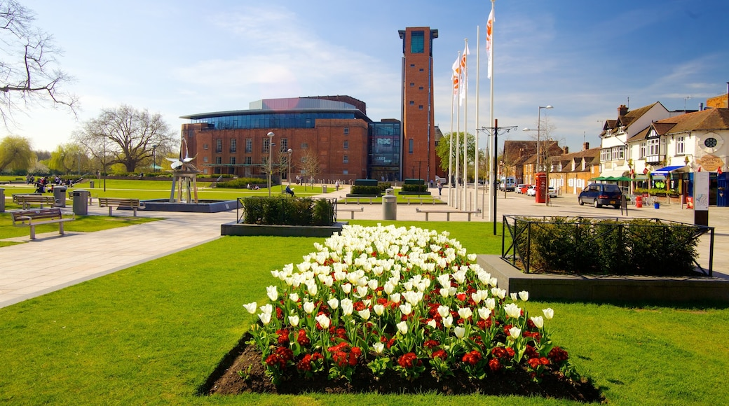 Birmingham showing flowers and a park