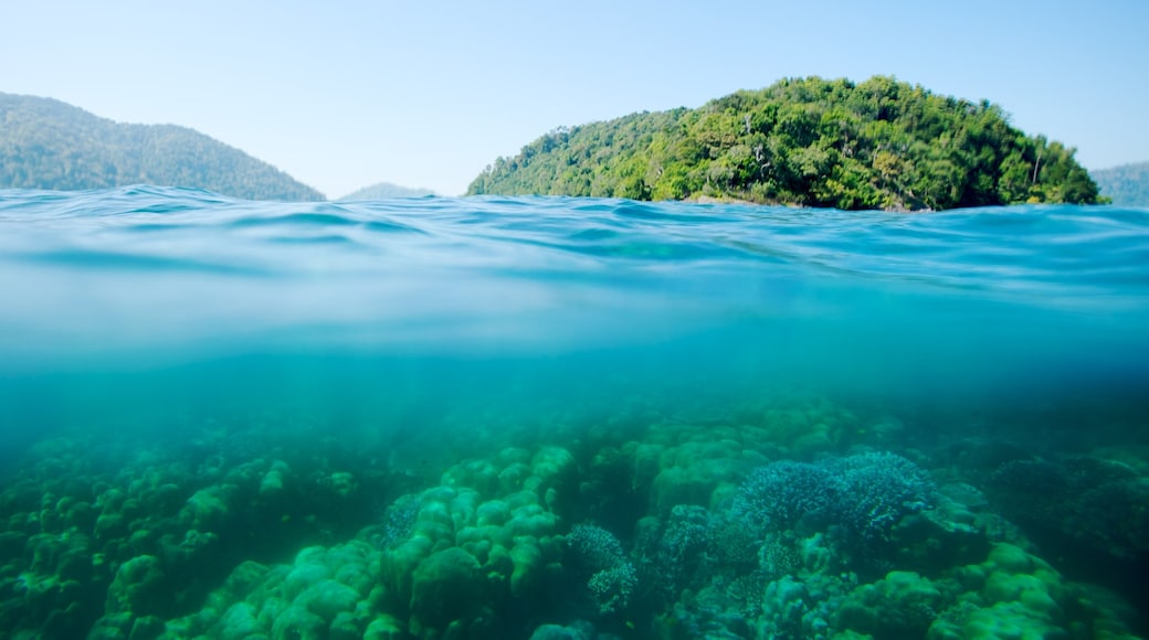 Ko Surin National Park featuring colourful reefs and general coastal views