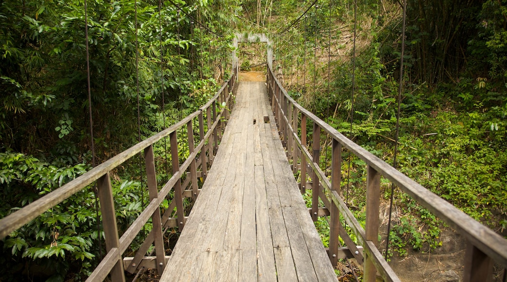 Khao Lak showing a suspension bridge or treetop walkway and forests