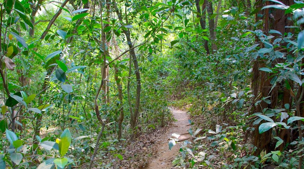 Lago Arambol Sweet Water caracterizando floresta tropical