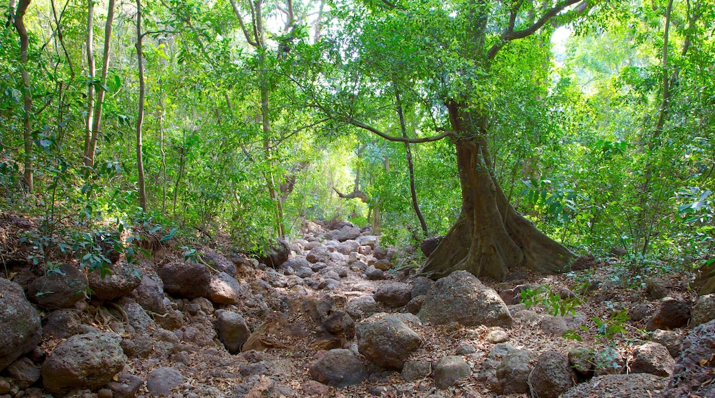 Lago Arambol Sweet Water que inclui floresta tropical